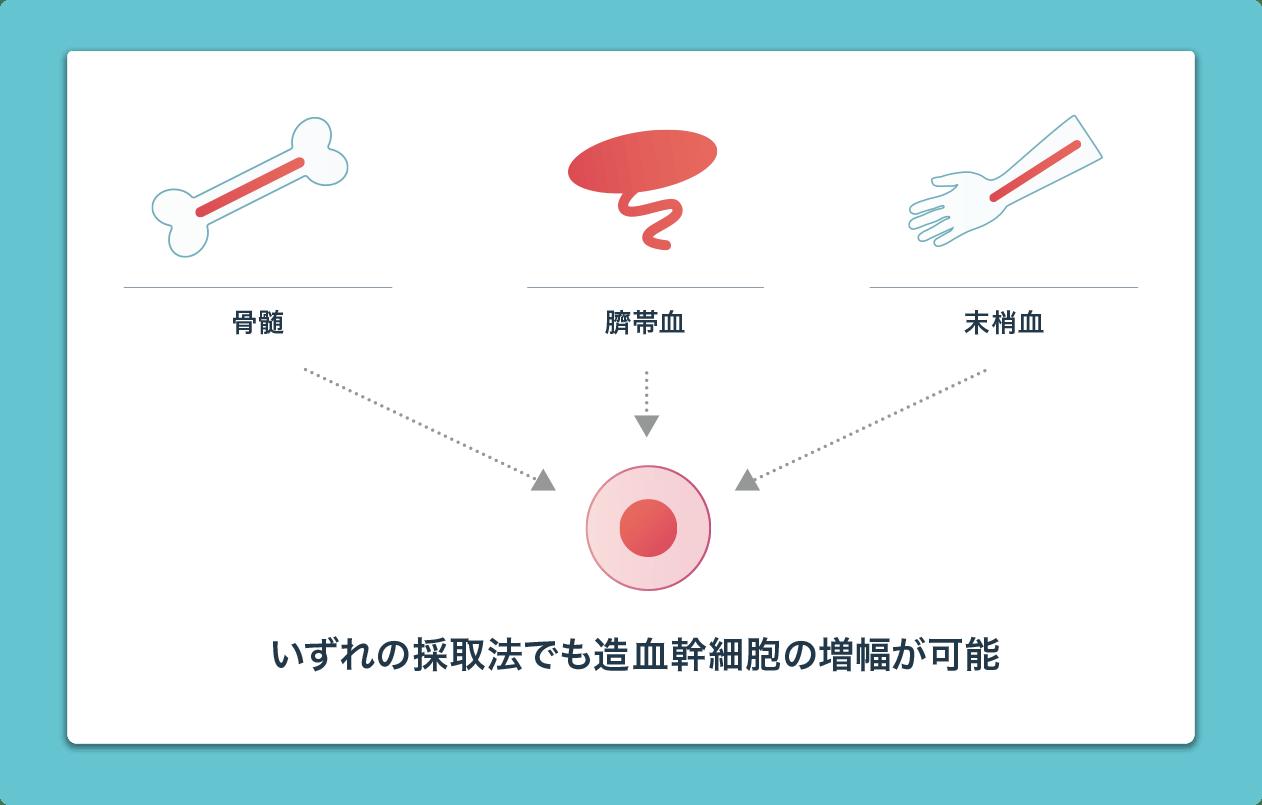 いずれの採取法でも造血幹細胞の増幅が可能