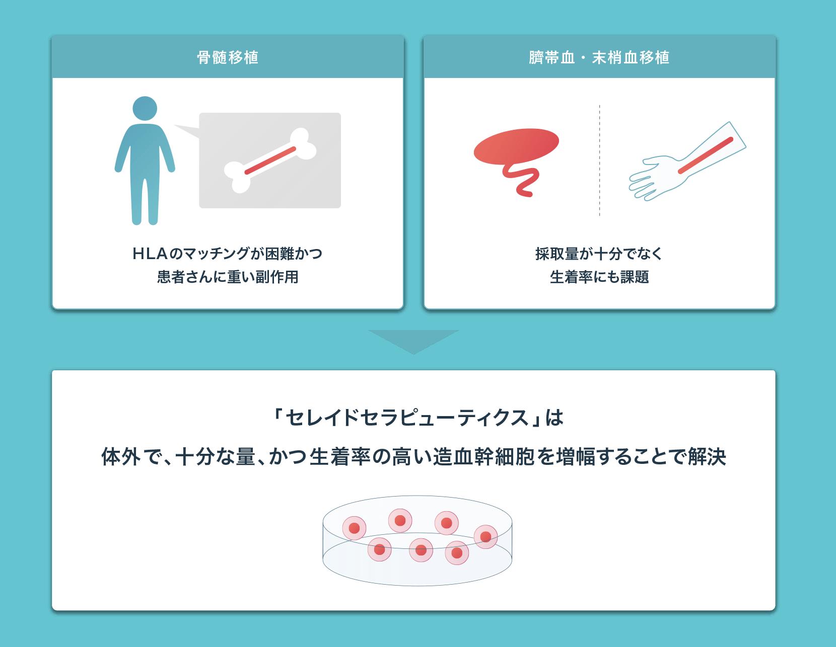 セレイドセラピューティクスは体外で十分な量かつ生着率の高い造血幹細胞を増幅することで解決